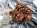 5x Zapfen Tannenzapfen Strobus Braun Deko Natur Tischdeko Weihnachten Advent Basteln Herbst 5