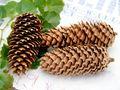 5x Zapfen Fichtenzapfen Braun Deko Natur Tischdeko Weihnachten Advent Basteln Herbst 2