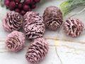 16 Zapfen Strictum Naturzapfen Rosa Beere Deko Weihnachten Adventskranz Basteln Streudeko Tischdeko Grabgestecke 5