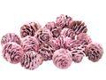 16 Zapfen Strictum Naturzapfen Rosa Beere Deko Weihnachten Adventskranz Basteln Streudeko Tischdeko Grabgestecke 1