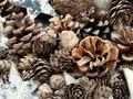 Zapfen Natur Sterne Weihnachten Deko Braun Holz Winter Tischdeko Basteln 4
