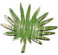 Tischdeko Monstera Farn Blätter Streudeko Holz Grün 6 Stück 7,5cm Basteln Dschungel 3