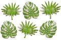 Tischdeko Monstera Farn Blätter Streudeko Holz Grün 6 Stück 7,5cm Basteln Dschungel 1