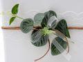 Briefbox Kartenbox Hochzeit Eukalyptus Kommunion Konfirmation Geburtstag Greenery Vintage Spitze 4