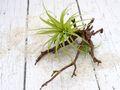 Kunstblume Kunstpflanze Sukkulente auf Ast Tillandsien Deko Terrasse Balkon  2