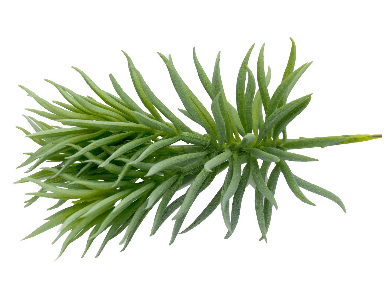 Kunstblume Kunstpflanze Sukkulente Gras Grün Tischdeko Hochzeit Garten Terrasse Deko