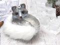 Christbaumschmuck Weihnachten Glas Baumschmuck Polarfuchs Fuchs Weihnachtskugel 5