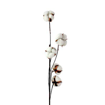 Baumwollzweig Getrocknet Baumwolle Dekozweig Baumwollzweig 5 Blüten Trockenblume 79cm