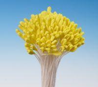 Lilien Blütenpollen gelb medium