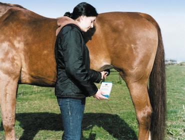 Détecteur de gestation HK pour chevaux – Bild 2