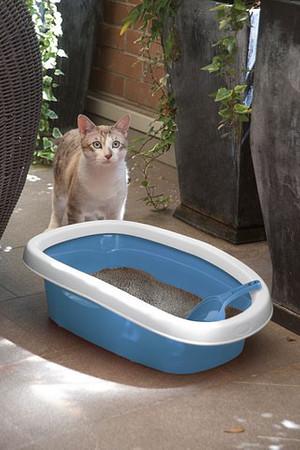 Kattentoilet – Bild 2