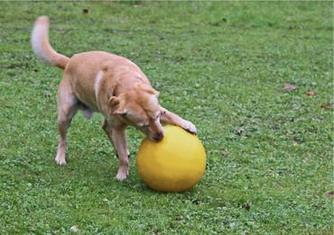 Balle de jeu pour chiens – Bild 3