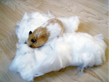 Hamsterwatten, wit