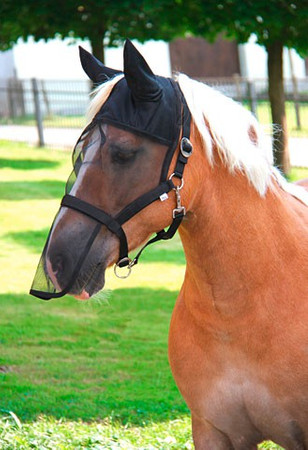Halter with integrated fly mask – Bild 2