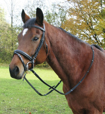 Leather Bridle, swedish Model – Bild 1