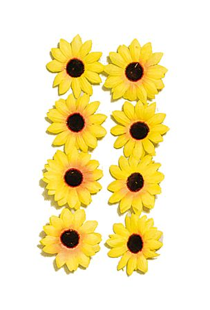 30 Sonnenblumen