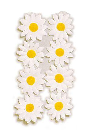 30 Margariten weiß