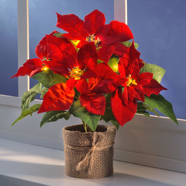 Poinsettia illuminé par  5  LEDs