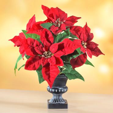 Weihnachtsstern mit Vase  »Antik«