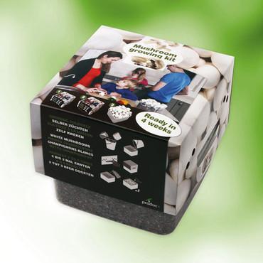 Champignons-teeltbox – Bild 1