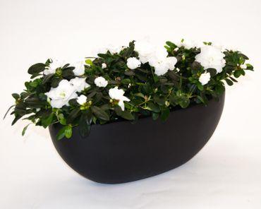 Pflanzschale Fiberglas oval 65x31xH25cm elegant schwarz-matt