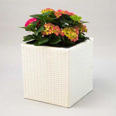 Pflanzkübel Polyrattan quadratisch 50x50x50cm weiß