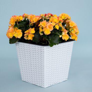 Blumenkübel quadratisch, konisch Polyrattan 42x42x38cm weiß.