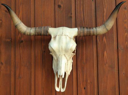 Bullenschädel Longhorn Schädel Skull Totenschädel Schädel Geweih Replik – Bild 3