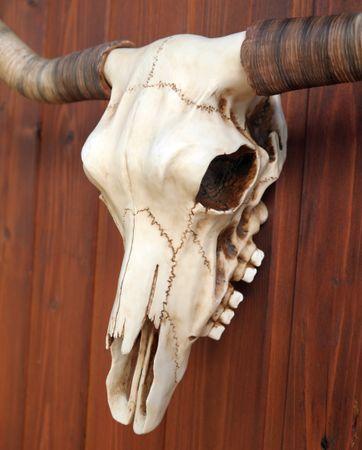 Bullenschädel Longhorn Schädel Skull Totenschädel Schädel Geweih Replik – Bild 4
