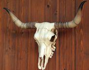 Bullenschädel Longhorn Schädel Skull Totenschädel Schädel Geweih Replik 001