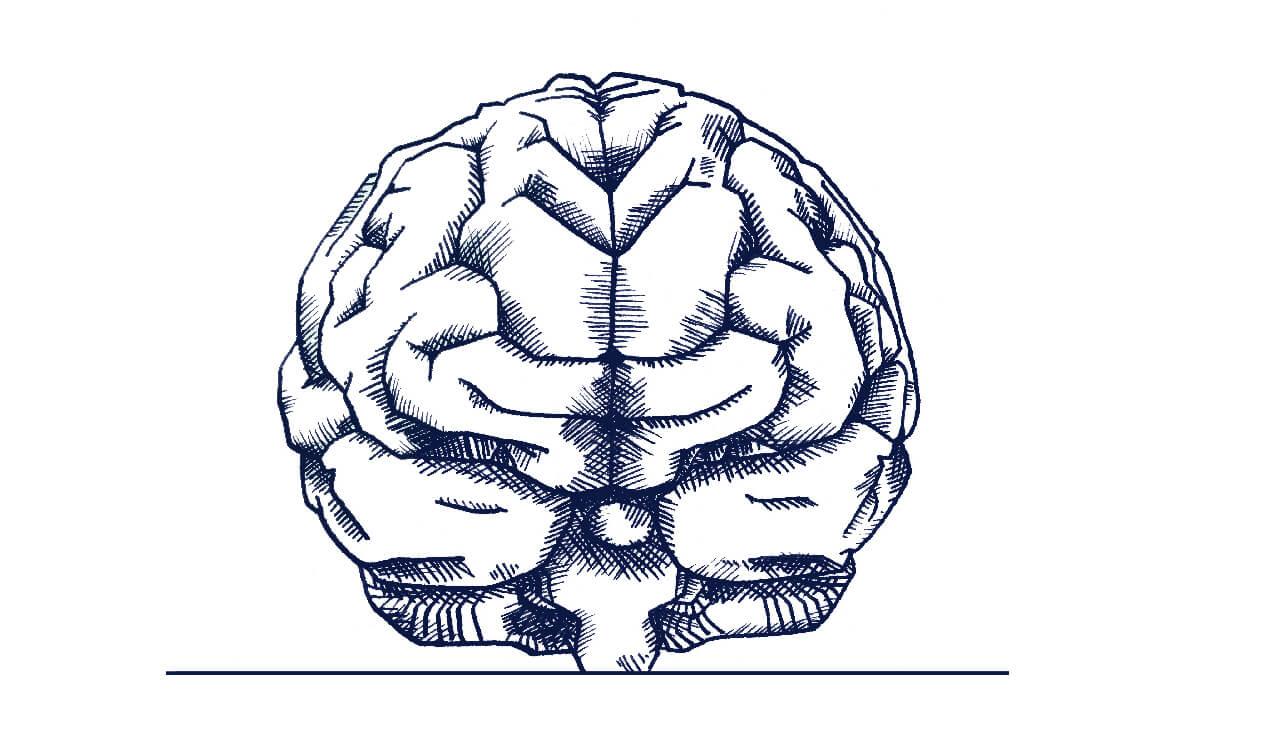 neurofelxir® liefert wichtige Mikronährstoffe für das alternde Gehirn.
