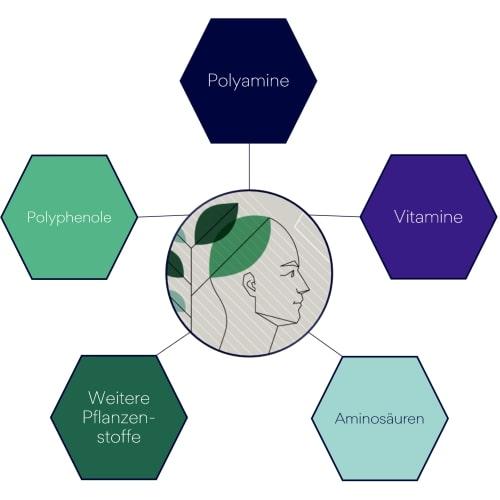 Die neurofelixir Rezeptur: eine einzigartige Kombination von Polyphenolen, Polyaminen, Vitaminen und Aminosäuren