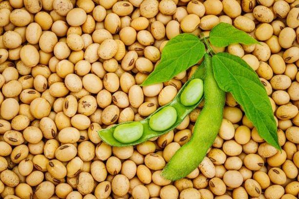Mit ihrem hohen Eiweißgehalt ist die Sojabohne eine echte Proteinbombe.