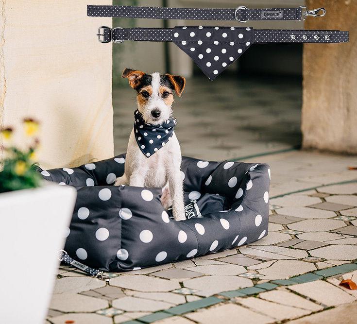 Eskadron NICI Hundehalsband + Leine Set - viele Größen