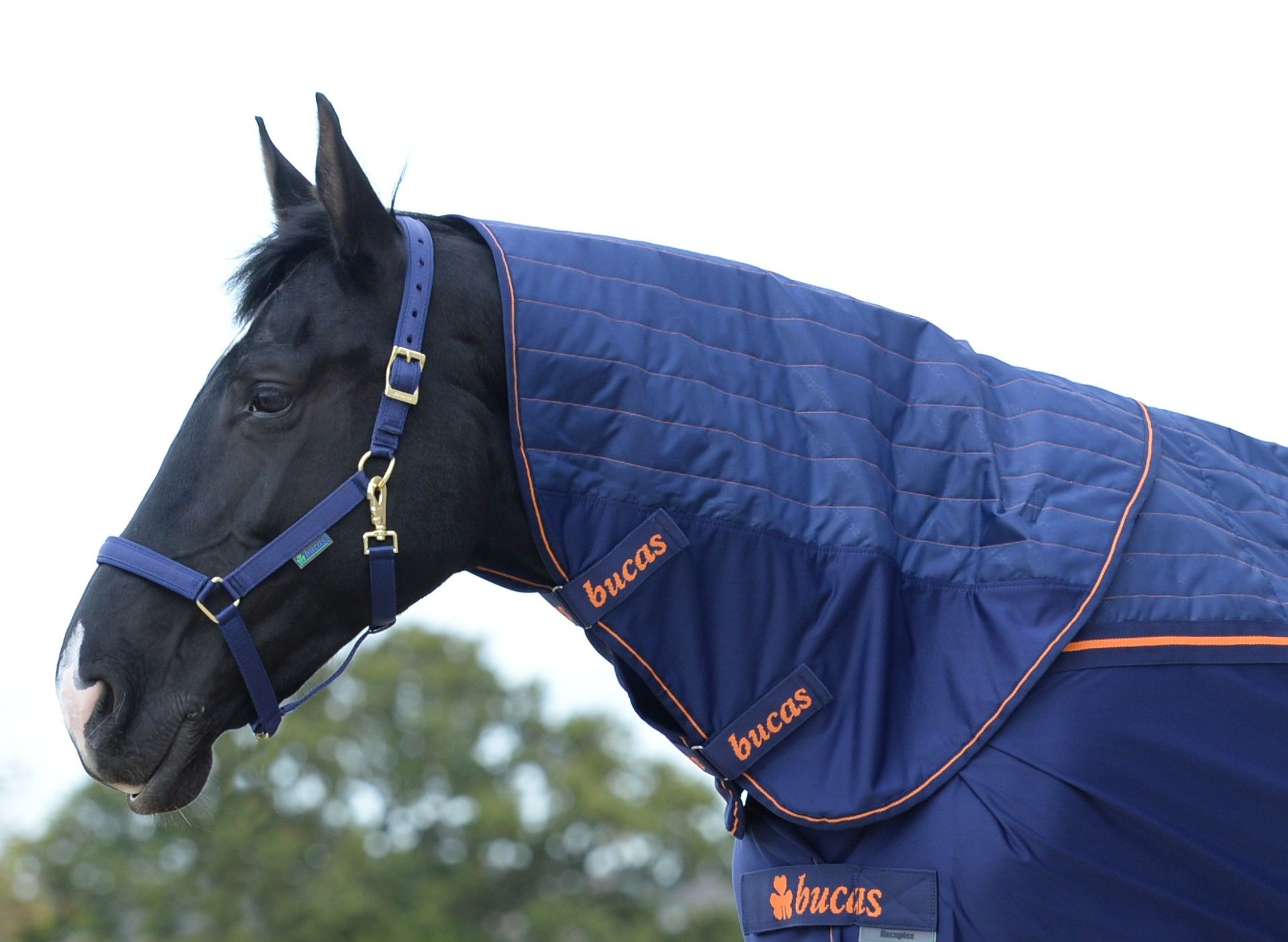 Bucas Therapy Cooler Neck Navy/ Orange