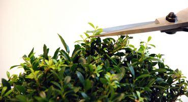 Okatsune 201 Bonsai-Schere mittellange Klinge und Gummistopfen – Bild 4