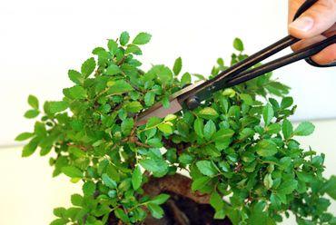 Okatsune 206 Bonsai-Schere leichte Präzisions-Gartenschere – Bild 2