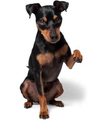 Mega-Einkaufsparadies Hunde