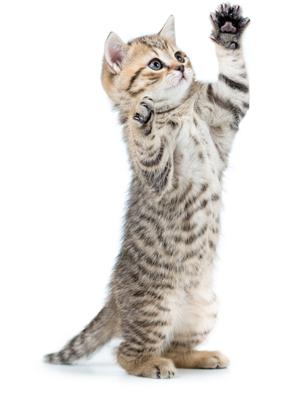 Mega-Einkaufsparadies Katzen