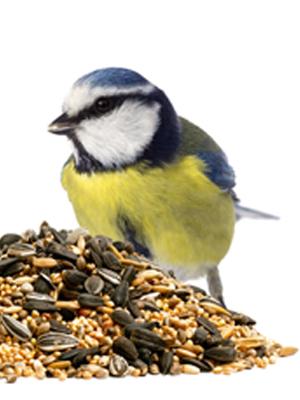 Mega-Einkaufsparadies Vögel
