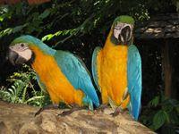 """Effekt-Postkarte 3D: """"2 Papageien"""" 002"""