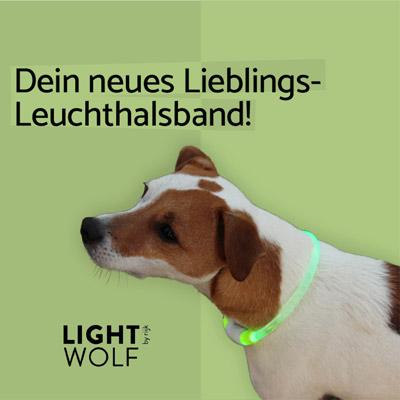 Leuchthalsband Hund