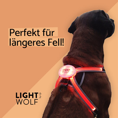 LED Hundeweste