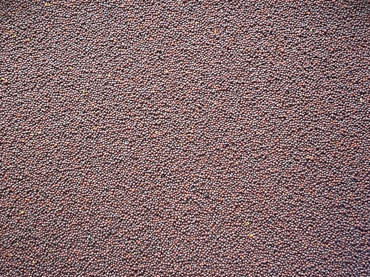 Senfkörner braun - schwarz ganz 1000g