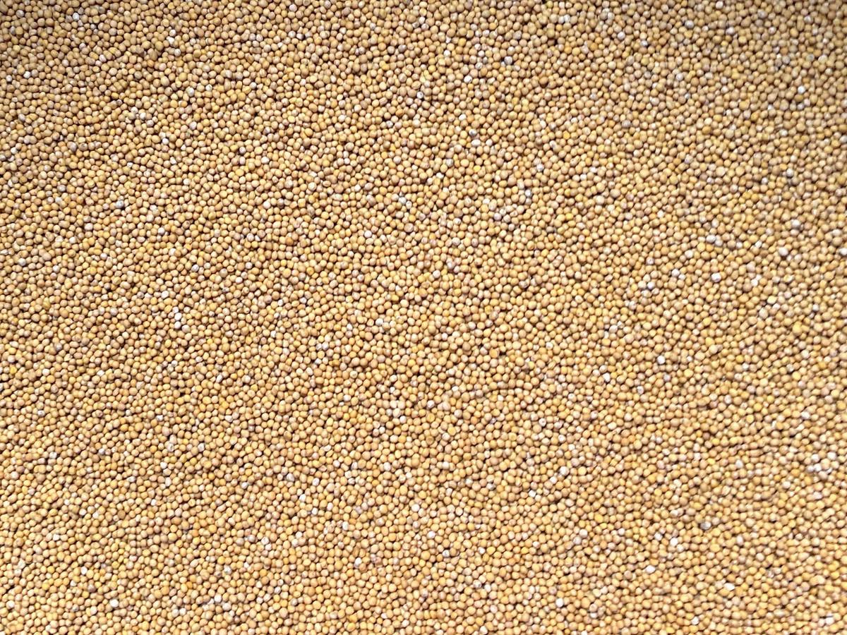 Senfkörner gelb ganz 500g