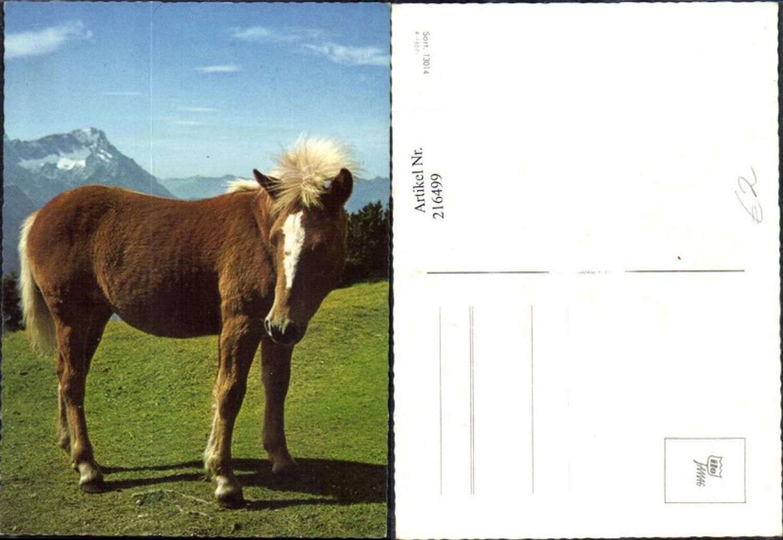216499,Tiere Pferd a. Wiese vor Bergkulisse  günstig online kaufen