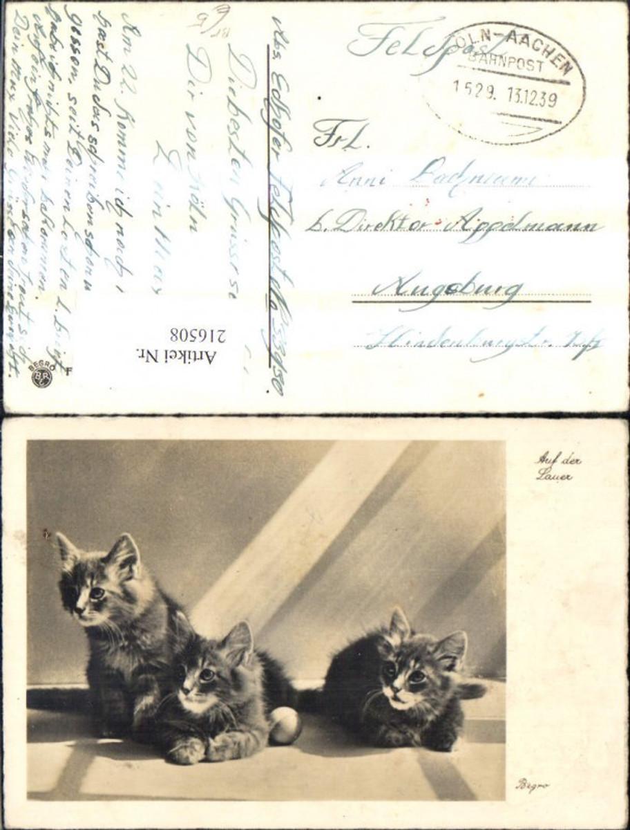 216508,Foto Ak Tiere Katze Katzen a. d. Lauer Bahnpost Zug 1529 Köln Aachen  günstig online kaufen