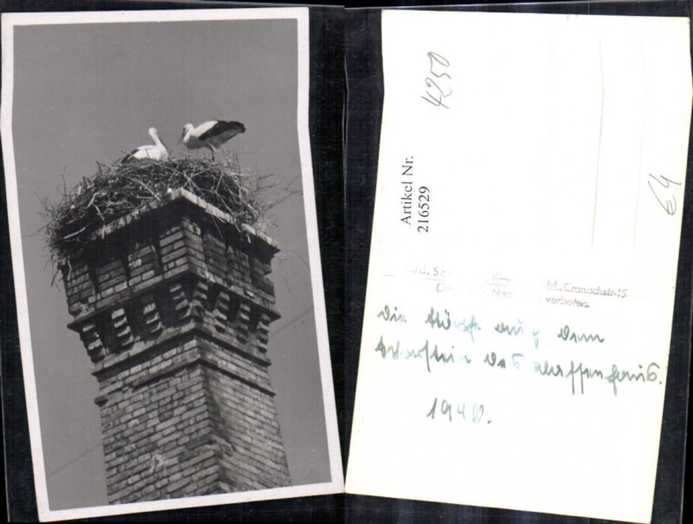 216529,Foto Ak Störche Storch Nest a. Schornstein Rauchfang  günstig online kaufen