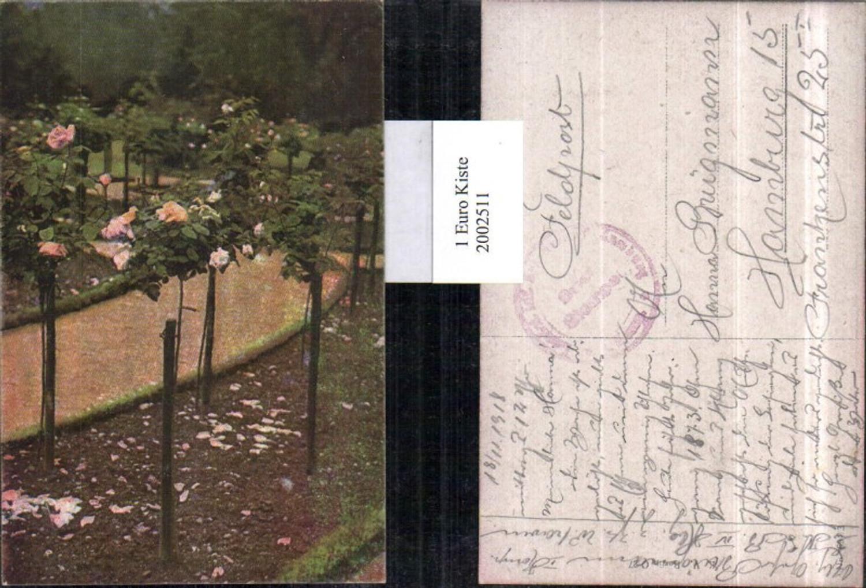 2002511,Rosenbäume Rosen Rosenblüten günstig online kaufen