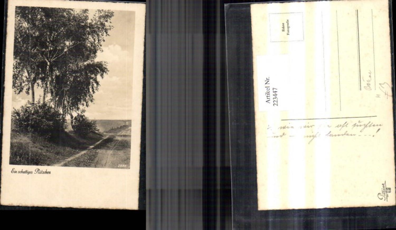 223447,Foto Ak Bäume Birken Ein schattiges Plätzchen  günstig online kaufen